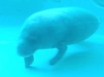 スタッフお勧め観光スポット 美ら海水族館