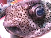 沖縄の美味しい!お魚