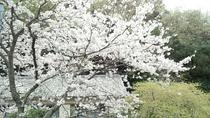いでゆ荘 桜の頃