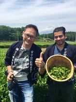 茶摘み体験ツアー 茶畑と富士山