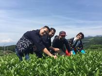 茶摘み体験ツアー 茶畑と富士山と茶摘み娘