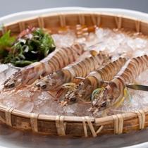 ■【料理】車海老