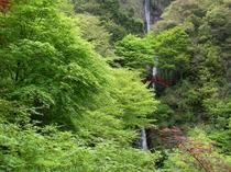 五宝滝新緑