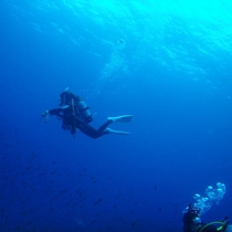 美しい海の中でダイビング満喫