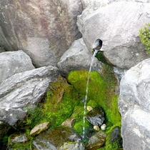 ■大山山麗の湧水■