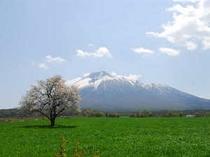 岩手山と上坊一本桜
