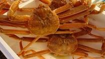 生の「ずわい蟹」