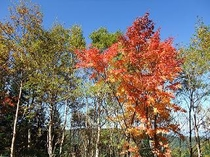 八ヶ岳の秋白駒池
