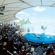 【須磨海浜水族園】車で25分。淡水・海水・熱帯魚、ラッコ、イルカ、アマゾン・アザラシ・ペンギン館。