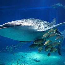 【海遊館】海景色を愉しみながらわずか半時間のドライブで世界最大級の水族館へ。