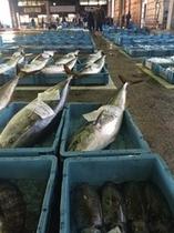 魚市場に並ぶ魚やイカやエビ・カニ・サザエ・アワビ!
