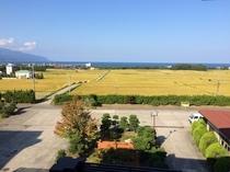 空きは新米の季節!当館でお出ししているお米は目の前の田んぼのお米です!