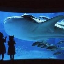 海遊館入館券付きプランもあります♪ 写真提供:海遊館