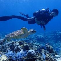 *ダイビング/時にはウミガメに遭遇することも・・!