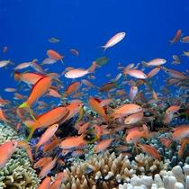 *ダイビング/透明度抜群の海ではこんな光景も見られます♪