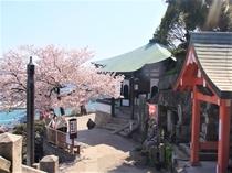 千光寺周辺と桜