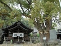 【徒歩6分】艮神社