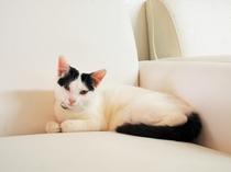 【その他】看板猫。すくすく元気に育っています