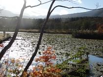 いもり池 初秋