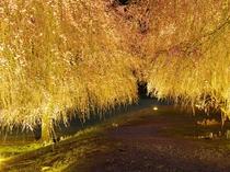 【竹田の里】福井県内1位の人気の高いお花見スポット♪しだれ桜にはうっとり・・♪車で約40分☆