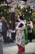 Maiko san at Gion