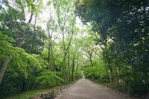 Green Kyoto1