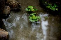庭園内の池にはメダカや金魚