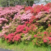 季節毎にたくさんのお花が咲きます。