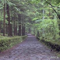 軽井沢幸福の谷/軽井沢町