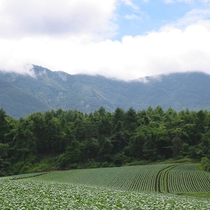 嬬恋村/群馬県吾妻郡