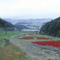 平尾山公園/佐久市