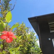 *お庭/宿を囲むハイビスカスは夏満開に咲き誇ります