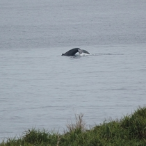 <テラスから>クジラ♪