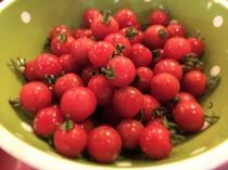 朝食バイキング 朝獲れ積丹産ミニトマト