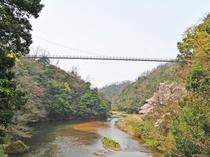 【周辺】高さ45m、長さ160mもあり足がすくみますが、眺めの良い吊り橋です。