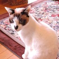 *民宿 暖心の愛猫(鼻がハートのラン)