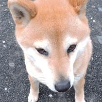 *民宿 暖心の愛犬(メイ)