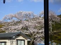 部屋から見える桜