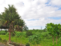 【周辺】南国の植物が広がります