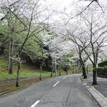 *施設一例/春は当館目の前の桜並木がとても綺麗です。