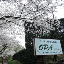 *施設一例/当館周辺は春には美しい桜並木が広がります。
