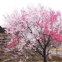 *【周囲の景色】春には花見をお楽しみいただけます