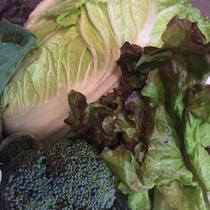 もぎたての野菜は朝食や夕食に