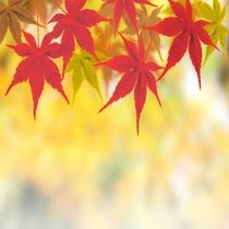 秋旅/紅葉