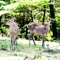 【鹿】敷地では野生の鹿に出会えます♪