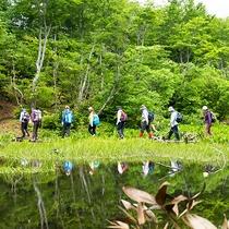 *【アクティビティ/トレッキング】関田山脈の天然ブナ林に癒されてみませんか?