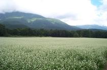 黒姫山とそば畑