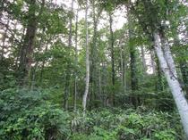 ペンション裏の森