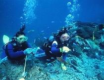 【ダイビング】黒潮踊る串本は本州屈指のダイビングスポットです。