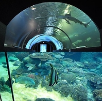 【串本海中公園】水中トンネルでのんびりお魚観察♪♪